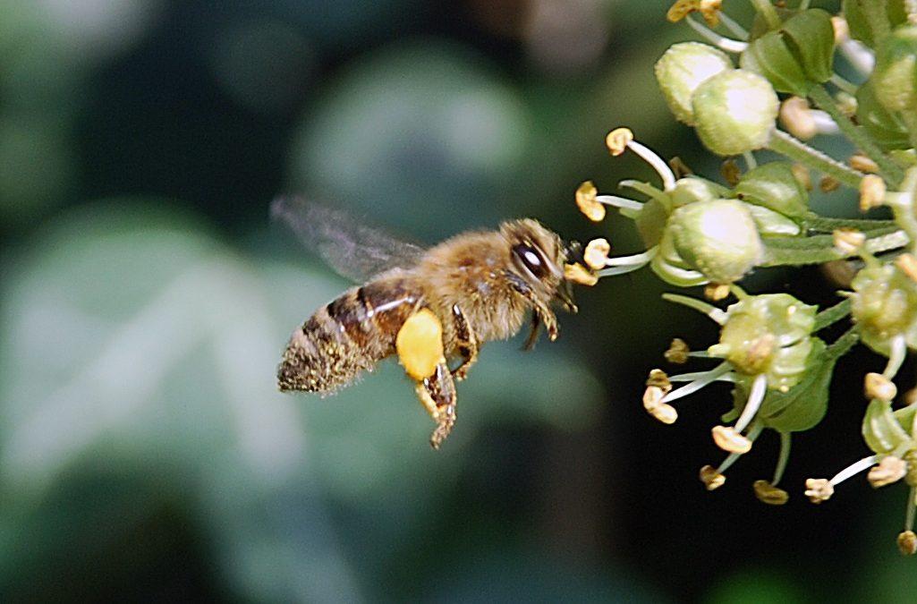 De nieuwe bijenstal